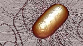 От кишечного заболевания умирают люди. Вирус уже проник в несколько стран Европы