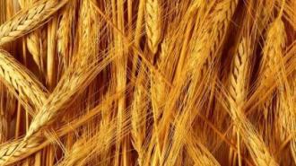 Россия уронила мировые цены на пшеницу