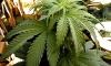 Тюки с марихуаной плавали у берегов Калифорнии