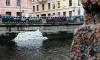 """На набережной канала Грибоедова поселился Умка. Медведя выгнал """"Мостотрест"""""""