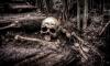 В Ленобласти около школы в кустах лежал скелет