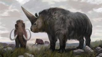 В уральской пещере найден древний носорог, которому более  120 тыс. лет