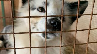 """""""Велес"""" просит петербуржцев помочь накормить животных"""
