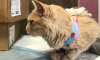 Для пострадавшей в ЛГУ кошки Фенечки собрали три коробки пожертвований