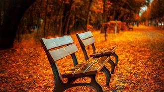 Гидрометцентр пообещал Ленинградской области теплый октябрь