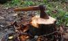 """В """"Ленэнерго""""ответили на обвинения в вырубке леса в заповеднике """"Гладышевский"""""""