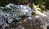 В Токсовском лесу обнаружили несанкционированную свалку