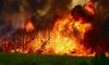 Ленобласть хочет привлечь Санкт-Петербург к борьбе с пожарами