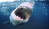 На курорте в Египте акула откусила ногу немецкому туристу, мужчина скончался