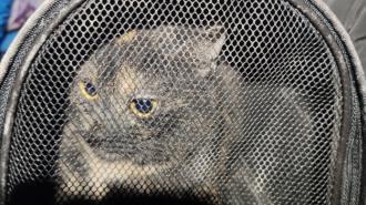 Ночью в Мурино спасатели несколько часов вызволяли кошку из вентшахты