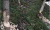 Дежурная бригада устранила последствия новогоднего дебоша бобров в Малом Ильинском саду