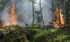 Выборгский район: актуальная статистика по пожарам