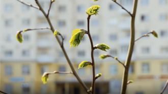 В воскресенье в Петербурге ожидается до +15 градусов