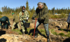 В Ленобласти высадили более 130 тысяч деревьев