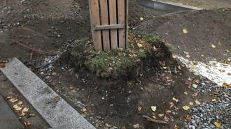 В центре Петербурга рабочие окружили деревья камнем