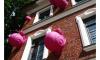 """В """"Новой Голландии"""" поселились гигантские розовые улитки"""