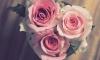 Из цветочного ларька на Солидарности вор украл три розы и плюшевого зайца