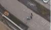 Петербуржцы сообщают о странных деталях падения мужчины из окна на Парнасе