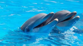 В Смольном раскрыли причины, мешающие строительству дельфинария вКалининском районе.