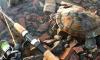 Рыбак поймал в Неве живую черепаху