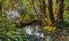 В Ленобласти найдены останки петербурженки,которые были растащены животными
