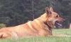 Живодеры убили собаку Сальмы Хайек с особой жестокостью