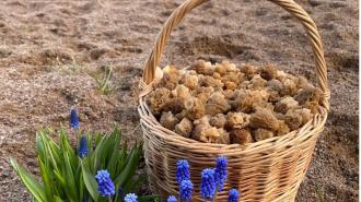 В Ленобласти открыли грибной сезон