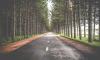 В следующем году отремонтируют участок дороги Луга-Новгород