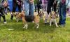 В Полюстровском парке прошел забег с животными