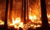 СК возбудил первое уголовное дело о пожарах в Красноярском крае