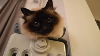 ЗакС Петербурга предложил отключить отопление в жилых домах