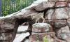 В Московском зоопарке впервые родился ягненок редкого голубого барана