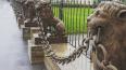 С ограды дачи Кушелевых-Безбородко демонтируют львов