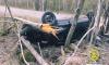 """После тарана дерева """"Renault"""" в Выборгском районе госпитализировано двое подростков"""
