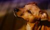 Петербургский суд арестовал хозяина выброшенной с 4 этажа собаку