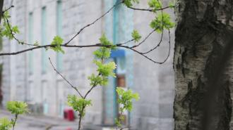 В Петербурге 12 апреля будет летняя погода