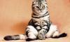 В Китае начнут клонировать котов за $35,4 тысяч