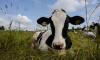 """Восемь новых фермерских хозяйств откроются в Ленобласти благодаря программе """"Агростартап"""""""