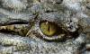 Ветеринар рассказал о страданиях крокодила в подвале дома в Петергофе