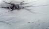 В Ленобласти под лед провалился рыбак