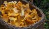 Лениградская область вошла в тройку грибных мест России