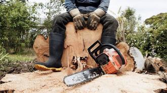 Пятерых лесорубов зверски убили под Тюменью, под подозрением их товарищ