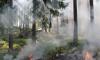 В Кировском районе Ленобласти продолжается торфяной пожар