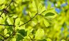 В Новом Девяткино жители обеспокоены исчезновением зелени