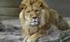 В зоопарке «Питон» Комсомольска-на-Амуре в пожаре сгорели все животные