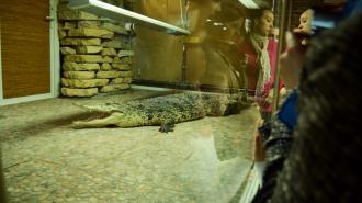С 1 мая повышается стоимость взрослого билета в Ленинградский зоопарк
