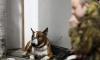 В Петербурге хозяин бойцовой собаки с оружием напал на каратиста и поплатился жизнью