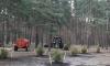 В Петербурге началась весенняя посадка деревьев и кустарников