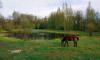 Графский пруд в Мурино получил шанс на возрождение