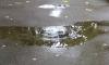 На Декабристов пожилой мужчина сорвался с водосточной трубы
